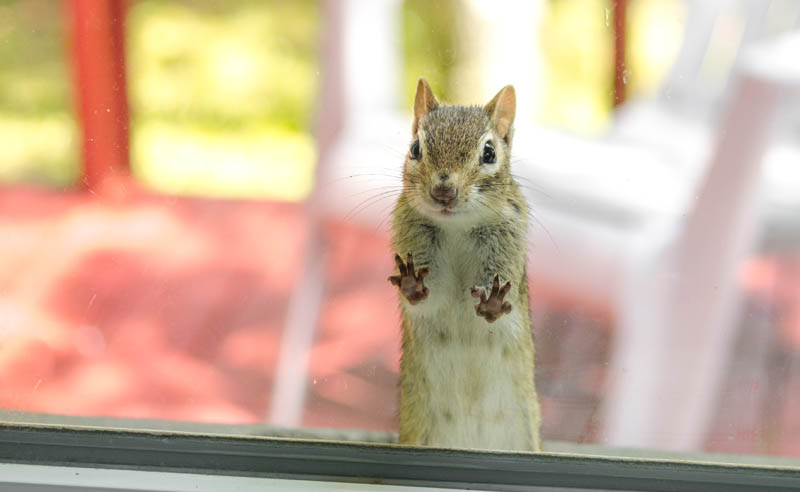 San Diego Employers: Do We Have to Allow Emotional Support Squirrels