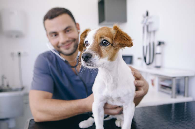An Overview of California Professional Corporations: Veterinarians